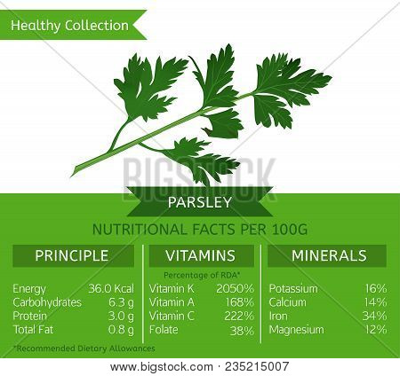 The Garden Parsley Health Benefits. Vector Illustration With Useful Nutritional Facts. Essential Vit