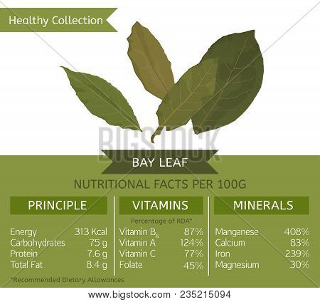 The Bay Leaf Health Benefits. Vector Illustration With Useful Nutritional Facts. Essential Vitamins