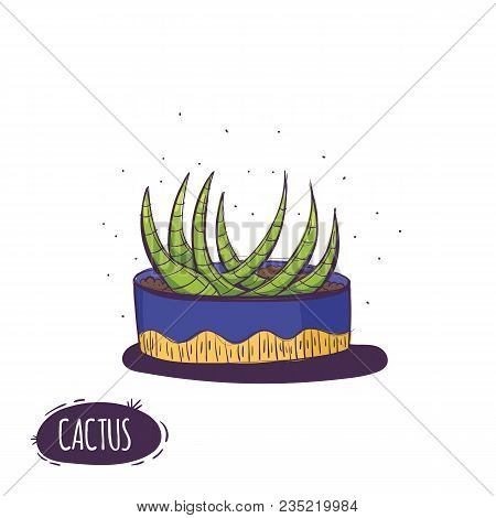 Set Of Cactus. Hand Drawn Succulent Ornament. Color Illustration. A Set Of Cacti - Line Drawing. Vec
