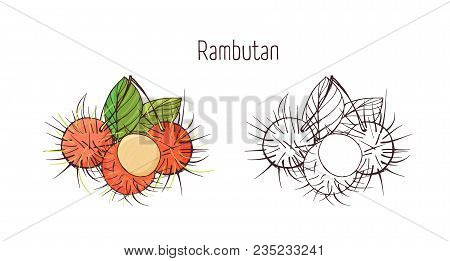 Colorful And Monochrome Contour Drawings Of Peeled And Unpeeled Rambutan Isolated On White Backgroun