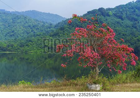 Beautiful Bougainvillea tree at Sai Thong Reservoir , Nakhon Nayok , Thailand poster