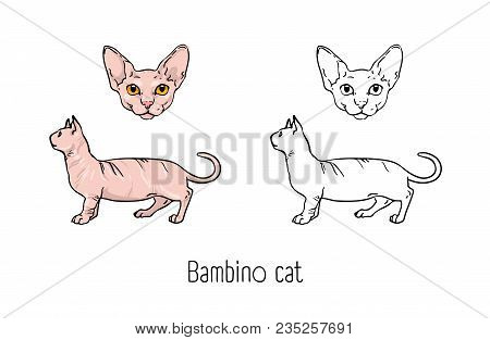 Bundle Of Colorful And Monochrome Contour Drawings Of Head And Full Body Of Bambino Cat Isolated On
