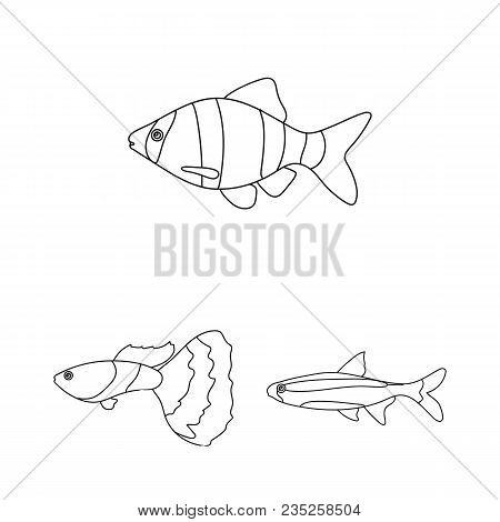 Different Types Of Fish Outline Icons In Set Collection For Design. Marine And Aquarium Fish Vector