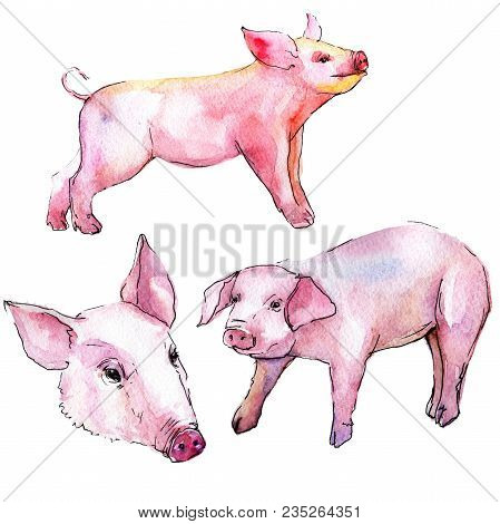 Pig Wild Animal In A Watercolor Style Isolated. Full Name Of The Animal: Pig. Aquarelle Wild Animal