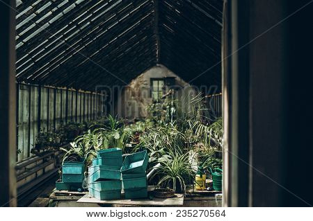 Inside Of A Greenhouse In Botanical Garden. Green Plants Palms And Trees In Green House Under Glass
