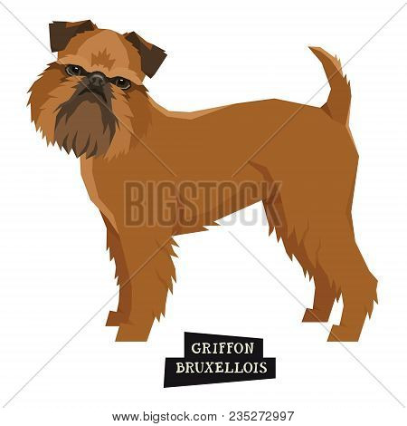 Dog Collection Griffon Bruxellois Geometric Style Isolated Object Set