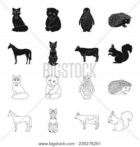 Horse, Cow, Cat, Squirrel And Other Kinds Of Animals.animals Set Collection Icons In Black, Outline