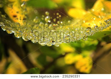 Web, Water, Nature, Macro, Droplets, Spider, Background, Spiders, Drop, Wet, Cobweb, Closeup, Abstra