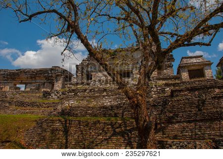 Palenque, Chiapas, Mexico: Ancient Mayan City Among Trees In Sunny Weather. The Archaeological Area