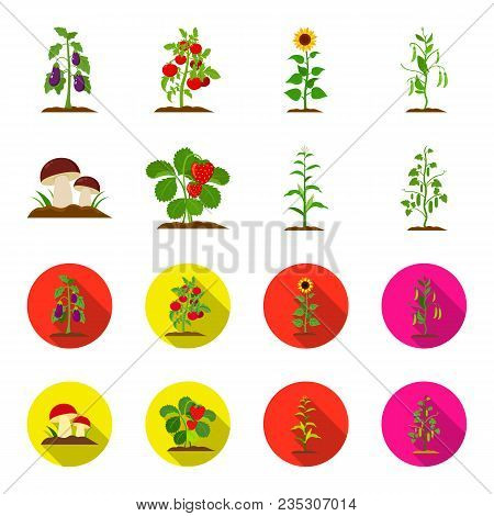 Mushrooms, Strawberries, Corn, Cucumber.plant Set Collection Icons In Cartoon, Flat Style Vector Sym
