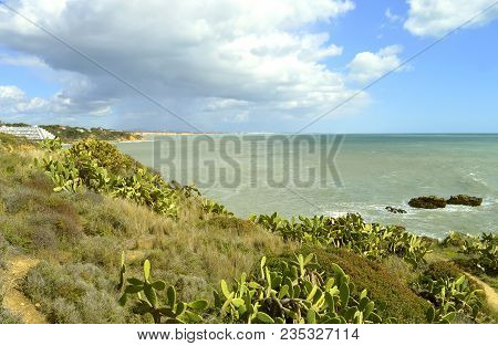 Albufeira, Algarve, Portugal - March 15, 2018 : Albufeira Auramar Beach Cacti Growing On The Algarve