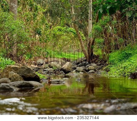 Mountain Landscape, Ravine With Rain Water, Valsequillo Of Gran Canaria, Canary Islands