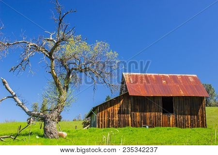 Old Wooden Barn With Rusty Tin Roof Next To Oak Tree
