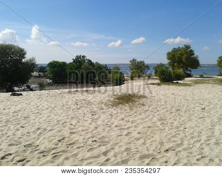 Beautiful Beach In The Background Indian Trees And Ocean
