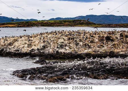 Cormorant Colony On An Island At Ushuaia In The Beagle Channel Beagle Strait, Tierra Del Fuego, Arge