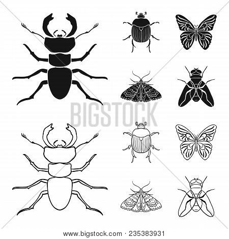 Wrecker, Parasite, Nature, Butterfly .insects Set Collection Icons In Black, Outline Style Vector Sy