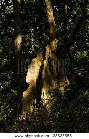 Termite Nest In Backlight Under The Sun  In Deep Jungle, Bardia, Nepal