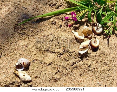 Sea Shells On Sand As Frame. Sea Shells Sand As Frame Background. Summer Vacation Background Frame W