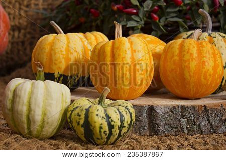 Autumn Outdoor Decor Of Pumpkins On Wooden Board. Many Bright Orange Pumpkins Outdoor Against Red Bi
