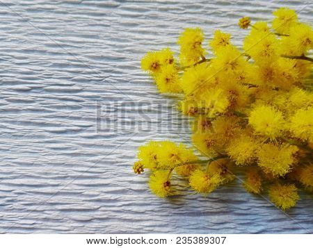 Little Yellow Flowers On White Background And Text Space. Card Of Small Yellow Flower And Paper Back