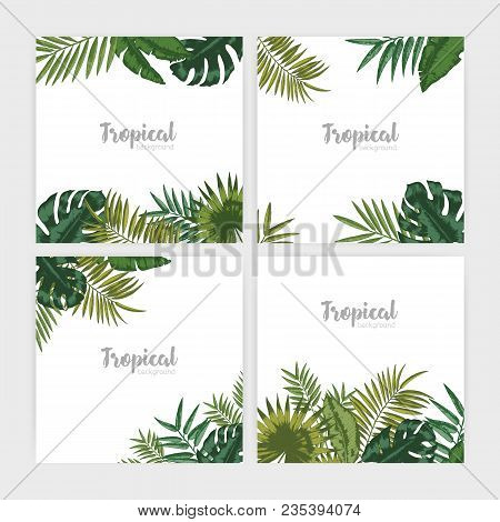 Collection Of Square Backdrops With Green Tropical Leaves. Bundle Of Backgrounds With Foliage Of Pal