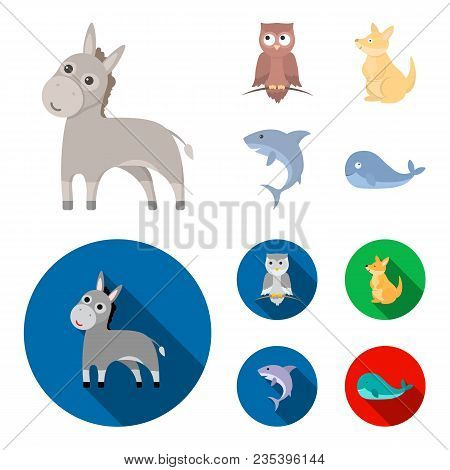 Donkey, Owl, Kangaroo, Shark.animal Set Collection Icons In Cartoon, Flat Style Vector Symbol Stock
