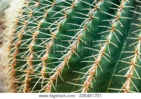 Close-up Of A Prickly Cactus.