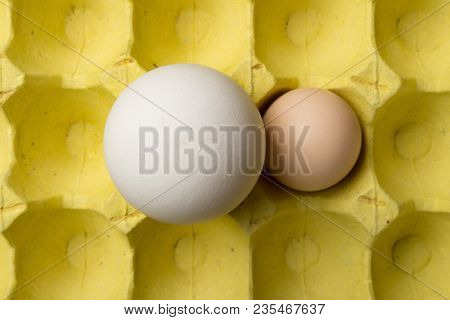Top View Giant Size Goose Egg Next To A Chicken Egg On Package Concept Of Size Comparison