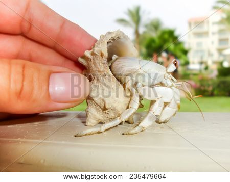 Female Hand Holding A Hermit Crab Sitting On Wooden Railing On Blurred Resort Hotel Background.