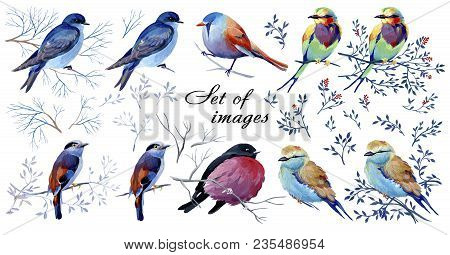 Set Gouache Birds On A Branches With Leaves