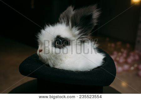 Mysterious Magician Hat With Rabbit Inside. Luxury