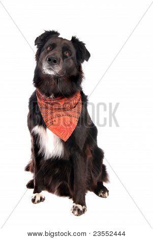Black Dog Sitting