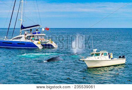 Humpback Whale Provincetown, Cape Cod, Massachussetts United States