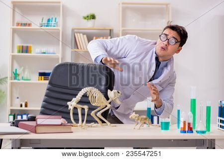 Funny scientist with cat skeleton in lab clinic