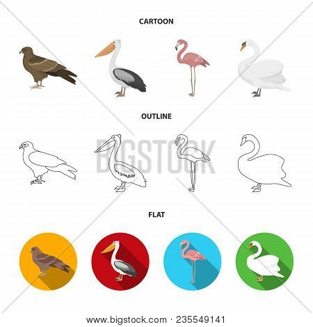 Kite, Pelican, Flamingo, Swan. Birds Set Collection Icons In Cartoon, Outline, Flat Style Vector Sym