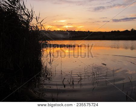 Calm Weather On A Lake With Beautiful Dawn And A Cane On The Left Side, Ripples In The Water, Calmin