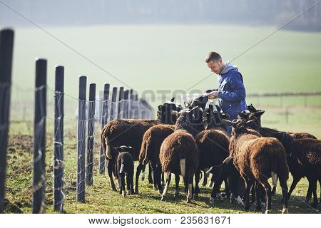 Sunny Morning On The Rural Farm. Cheerful Young Farmer With Bucket Feeding Herd Of Black And Brown S