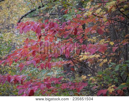 Natural Colorful Bouquet Profusion Of Vibrant Colors Of Autumn In The Forest