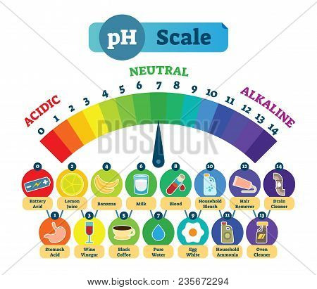 Ph Acid Scale Measurement Vector Illustration Diagram With Acidic, Neutral And Alkaline Example Icon
