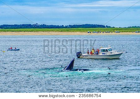 Provincetown, Cape Cod, Massachusetts, Us - August 15 2017 Boat His Crew And Whale.