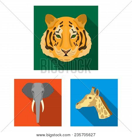 Wild Animal Flat Icons In Set Collection For Design. Mammal And Bird Vector Symbol Stock  Illustrati