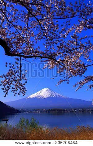 Cherry Blossoms And Mt. Fuji In Blue Sky From The Northern Coast Of Lake Kawaguchi Japan 04/10/2018