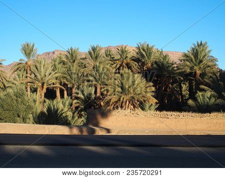 Asphalt Road On Oasis Landscapes Of Green Palm Trees In Central Morocco In Old Oulad Village Near Za
