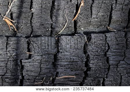 Interesting Texture Of A Charred Tree Closeup Of A Beautiful Natural Background