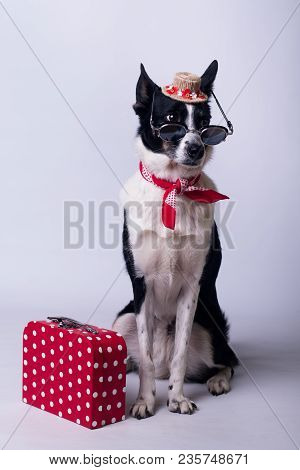 Mixed Breed Dog Portrait On White Background With Red Suitcase