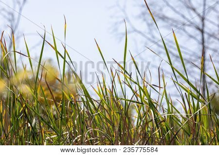 Marsh Grass From A Low Angle View Blurred Background