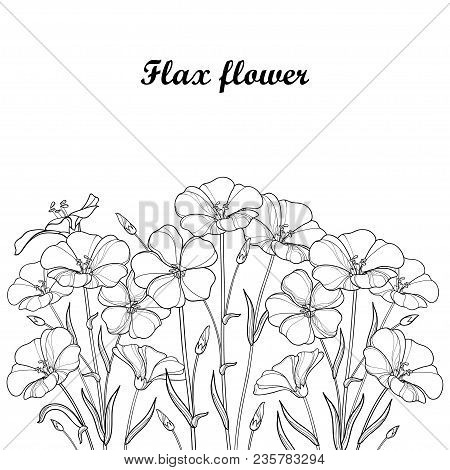 Vector Bouquet With Outline Flax Plant Or Linseed Or Linum. Flower Bunch, Bud And Leaf In Black Isol
