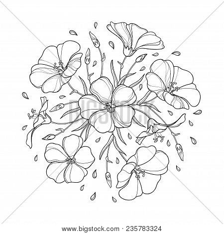 Vector Round Bouquet With Outline Flax Plant Or Linseed Or Linum. Flower Bunch, Bud And Leaf In Blac