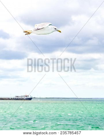 Blue Clouded Sky, Clear Sea Water, Panoramic Skyline, Sea-gulls, Coast View From A Sea.