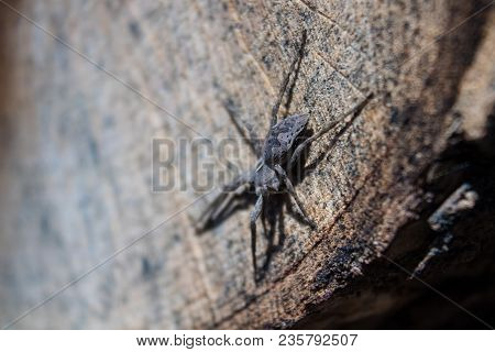 The Spider Sits On A Wooden Stump.